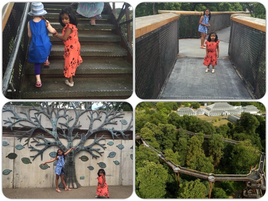 treetop walkway Picture