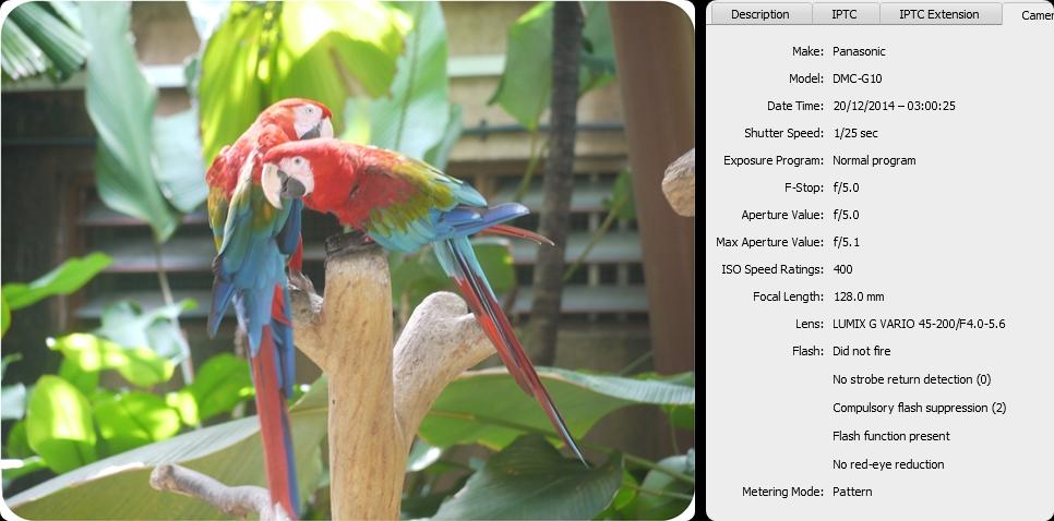 Birds in Fcus-horz