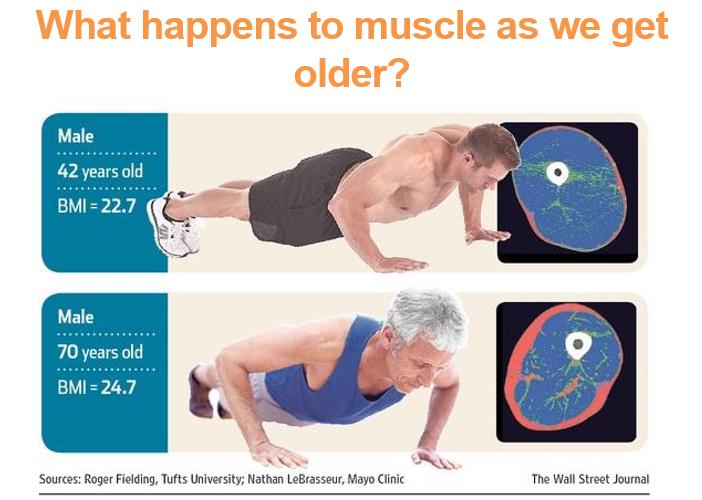 Muscle Loss 1